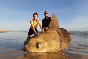 Cá thái dương khổng lồ trôi dạt bờ biển Úc, ai cũng tưởng 'đồ giả'
