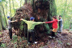 'Vương quốc' của những gốc cây lớn kỳ lạ chưa từng thấy ở Quảng Nam
