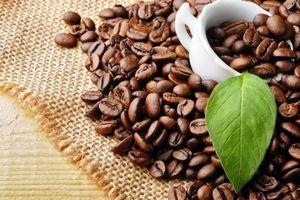 Nông sản 20/3/2019: Cà phê quanh mức thấp nhất 13 năm và đậu tương giảm