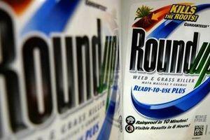 Monsanto liên tiếp thua kiện vì thuốc diệt cỏ gây ung thư