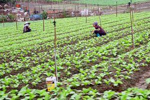 Nhân rộng mô hình sản xuất nông nghiệp tập trung