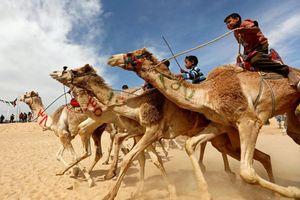 Những 'kỵ sĩ nhí' cưỡi lạc đà đua giữa sa mạc Ai Cập