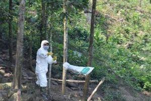 Quảng Nam: Khẩn trương lập 2 điểm chốt kiểm dịch tả lợn Châu Phi
