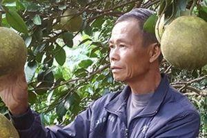 U80 ngồi không 'khó ở' trồng lung tung vẫn kiếm bộn tiền
