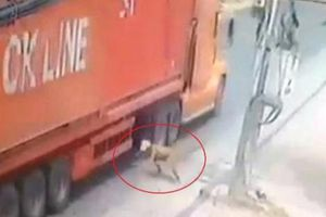 'Đứng tim' clip người đàn ông lao đầu vào gầm xe container ở Sài Gòn