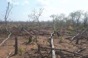Khởi tố vụ phá rừng ở huyện biên giới Chư Prông
