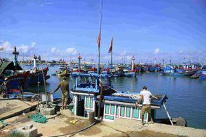 Phát hiện nhiều tàu cá tận diệt thủy sản trong Khu bảo tồn biển Lý Sơn
