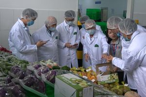 Xuất khẩu rau củ quả sang Singapore: Đầu tư chiều sâu vào phát triển bền vững