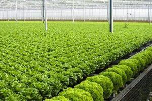 Hải Phòng tái cơ cấu ngành nông nghiệp với công nghệ cao