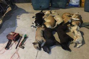 Đồng Nai: Nhóm trộm chó dùng nỏ chống công an
