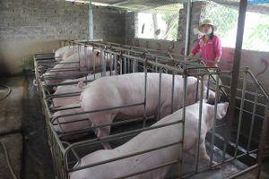 Người chăn nuôi lợn lao đao vì thị trường 'đóng băng'