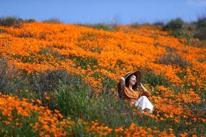 Những cánh đồng hoa Giai nhân đẹp ngất ngây nhìn từ ngoài không gian