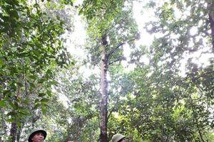 Lạng Sơn: Tăng cường các biện pháp phòng cháy, chữa cháy rừng, ngăn chặn phá rừng