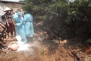 Sơn La: Huyện thứ 3 xuất hiện dịch tả lợn châu Phi