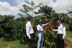 Đồng vốn Agribank và 'vị ngọt' của ngành nông nghiệp Việt Nam