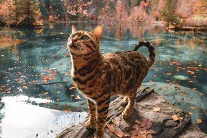 Du lịch sang chảnh cùng mèo cưng khắp chốn 'tiên cảnh' trên thế giới