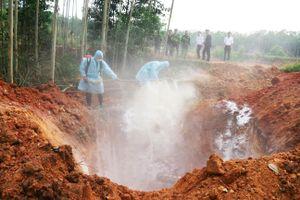 Quảng Ninh: Thu giữ, tiêu hủy lợn giống xuất lậu từ Việt Nam sang Trung Quốc