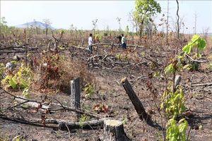 Hàng chục hécta rừng ở Đắk Lắk bị chặt phá, sang nhượng trái phép