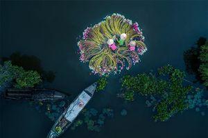 3 bức ảnh chụp ở Việt Nam được vinh danh là ảnh vui tươi nhất và ảnh thể thao đẹp nhất thế giới