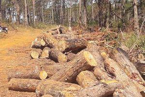 Chủ tịch xã nhận hàng trăm triệu đồng để tiếp tay phá rừng như thế nào?