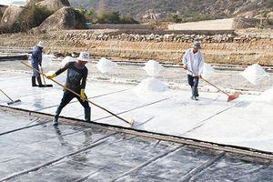 Đẩy mạnh sản xuất, tiêu thụ muối cho diêm dân