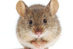 Thực hư đoạn clip chú chuột bí mật dọn nhà cho ông lão suốt hơn 1 tháng trời