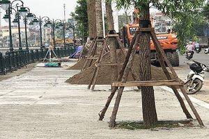 Hải Phòng: Khắc phục cơ bản sự cố sụt lún tại vỉa hè đường Tam Bạc