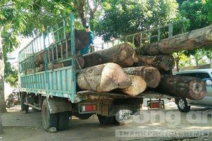 Gặp kiểm lâm, tài xế chở gỗ lậu 'khủng' bỏ xe chạy trốn