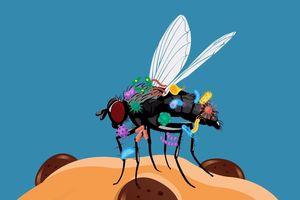 Chuyện gì sẽ xảy ra khi ruồi đậu trên thức ăn?
