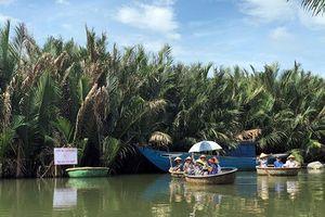 Yên bình rừng dừa ở Cẩm Thanh