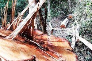 Gia Lai: Thanh tra toàn diện Ban Quản lý Rừng phòng hộ Bắc Ia Grai