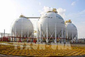 Lượng khí cung cấp cho cụm công nghiệp Khí - Điện - Đạm Cà Mau sẽ tụt giảm 40%