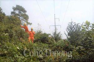 PC Thừa Thiên Huế tăng cường bảo vệ hành lang an toàn lưới điện cao áp
