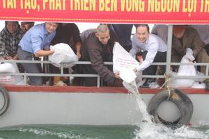 Ngành thủy sản Hà Tĩnh có những bước phát triển mạnh mẽ