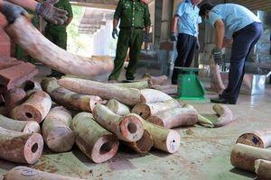 Phát hiện gần chục tấn ngà voi nhập từ châu Phi về Việt Nam