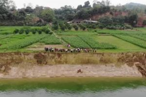 Phú Thọ: Hàng chục km bờ sông Chảy bị sạt lở vì cát 'tặc'