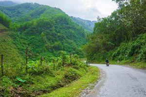 Ngất ngây trước vẻ đẹp xanh mướt như tranh vẽ của đồi chè Đông Giang