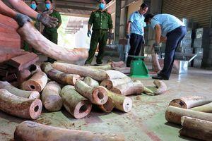 Phát hiện container chứa gần 10 tấn ngà voi châu Phi cập Cảng Đà Nẵng