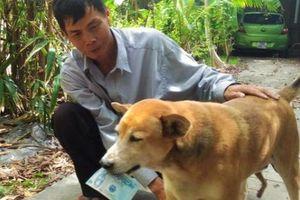 Chủ chú chó bán vé số ở Cà Mau bị điều tra hành vi dâm ô