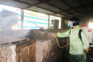 Xuất hiện dịch tả lợn châu Phi tại Quảng Trị