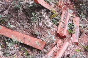 Vườn Quốc gia Phong Nha - Kẻ Bàng bị 'xẻ thịt': Ai phải chịu trách nhiệm?