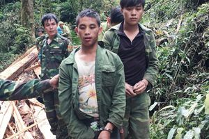 Bắt 2 người Lào vượt rừng sang Nghệ An khai thác gỗ trái phép