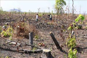 Đắk Lắk: Những cánh rừng phòng hộ dọc Quốc lộ 29 đang 'chảy máu'