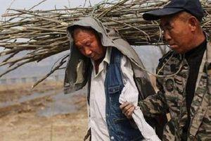 Cuộc sống của bộ đôi khuyết tật cùng nhau trồng 10.000 cây xanh người Trung Quốc, giờ ra sao?