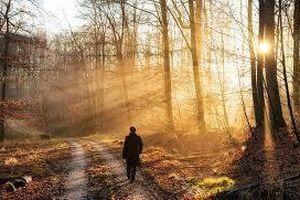 Đi về phía khu rừng