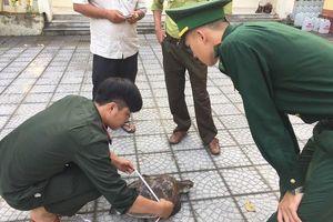 Thừa Thiên Huế: Thả cá thể rùa biển quý về tự nhiên