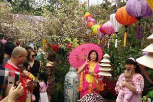 Người dân Hà Nội chen chân chụp ảnh bên hoa anh đào Nhật Bản