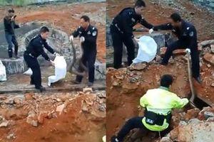 Dọn dẹp phần mộ tổ tiên, tìm thấy điều kinh hoàng