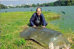 Hi vọng Hồ Gươm lại thấp thoáng bóng rùa