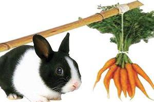 Bộ Nông nghiệp phải bỏ quy định 'thỏ không được ăn cà rốt'